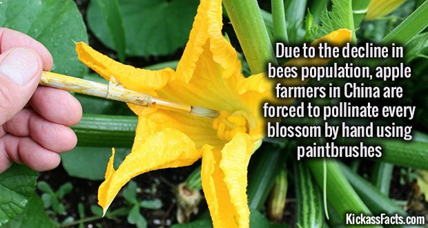 1007 Pollination by hand