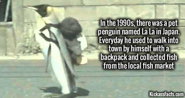 1023 La La Penguin