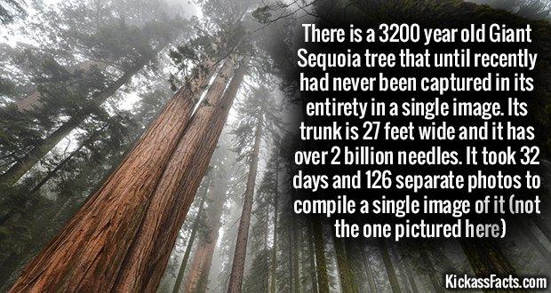 1030 The President Sequoia
