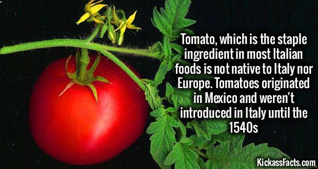 1082 Tomatoes