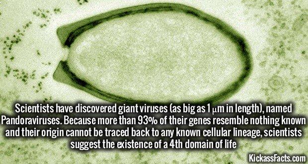 1164 Pandoravirus