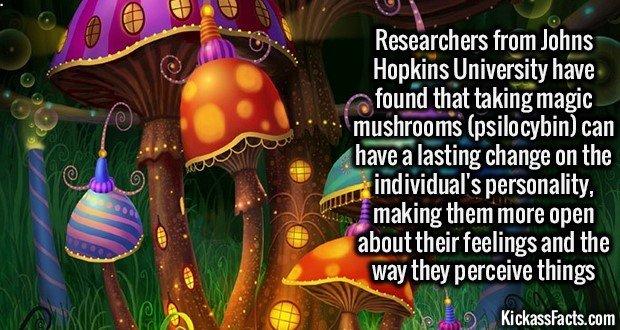 1357 Magic mushrooms