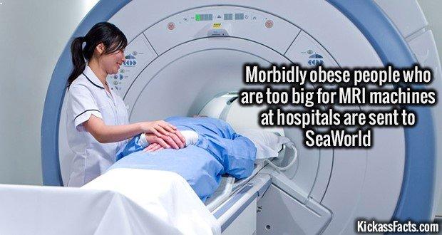 BRAW4F Radiologist helping patient with MRI scanning machine