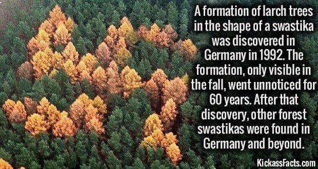 1448 Swastika Forest
