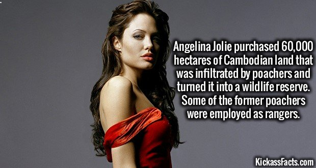 1506 Angelina Jolie
