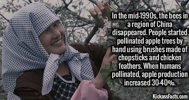 1745 China Hand Pollnation