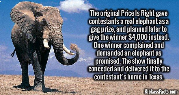 1748 Price is Right Elephant