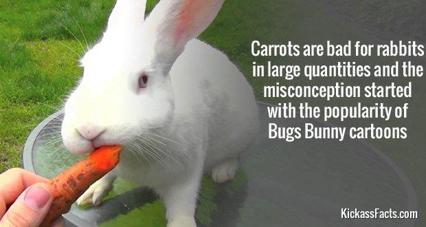 705RabbitCarrot