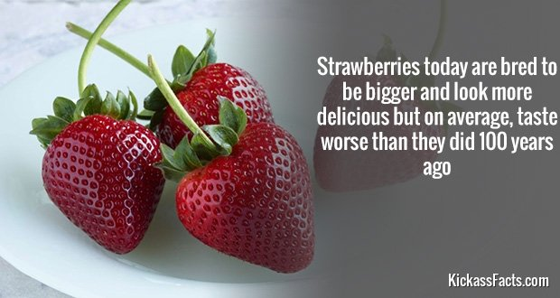737Strawberries