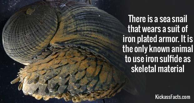 799Metal Snail