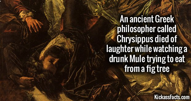 916 Chrysippus