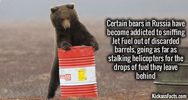 988 Russian Bears