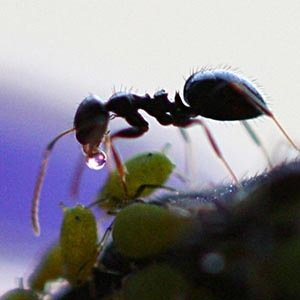 Ant-Random Facts List