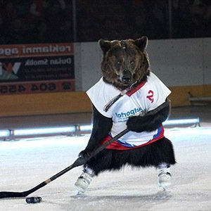 Bear Hockey-Interesting Facts About Ice Hockey