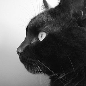 Black Cat-Interesting Facts About Halloween