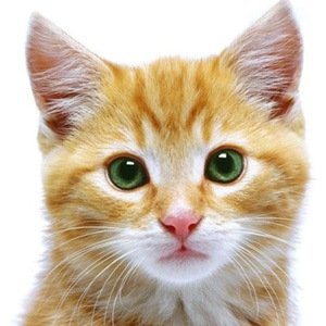Cats-Amazing Facts About Health