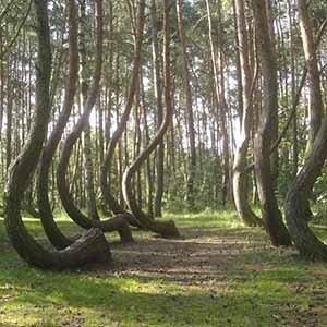 Crooked Forest-Random Kickass Fact List