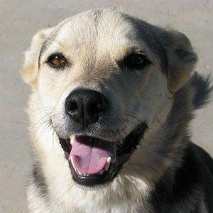 Happy Dog-Happy Facts
