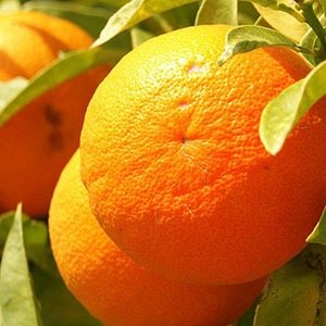 Orange- Interesting Facts About Fruits
