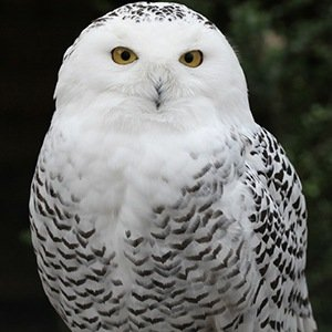 Owl-Interesting Facts About Harry Potter