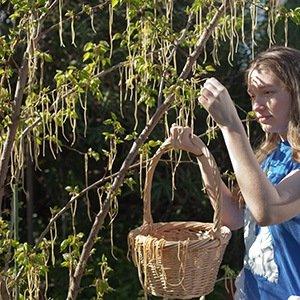 Spaghetti Trees-Interesting Facts About Switzerland