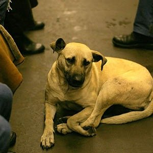 Street Dog Subway-Interesting Facts About Russia