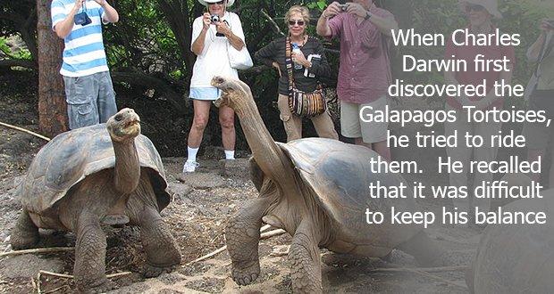 108Galapagos Tortoises