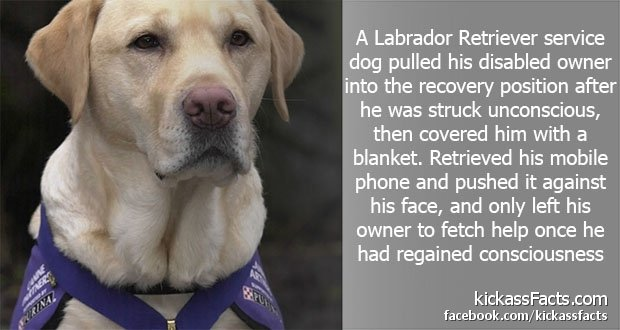 74Labrador-Retriever.jpg