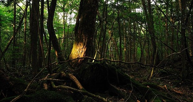 Aokigahara-Scariest Places on Earth