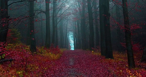 Black Forest-Surreal Places on Earth