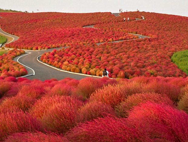 Hitachi Seaside Park-Surreal Places on Earth