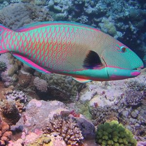 25 weird facts about poop for Parrot fish facts
