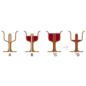 Pythagoras cup-Interesting Facts About Wine