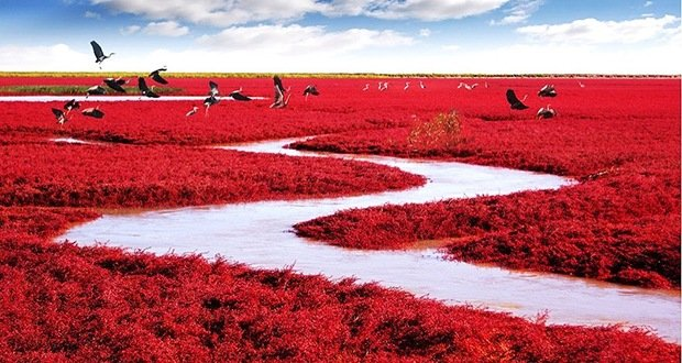 Red Beach-Surreal Places on Earth