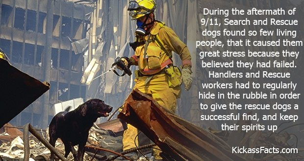 221RescueDogs9-11