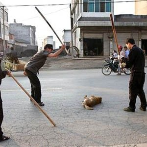 Dog Slaughter-Interesting Facts About China