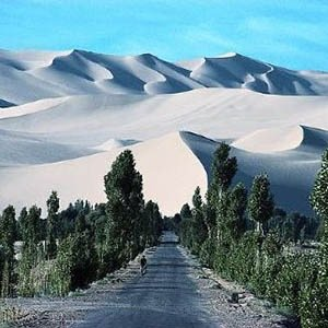 Gobi Forest-Interesting Facts About China
