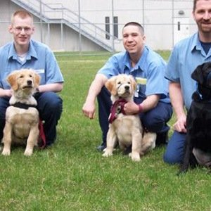Prison Dogs-Interesting Facts About Dogs
