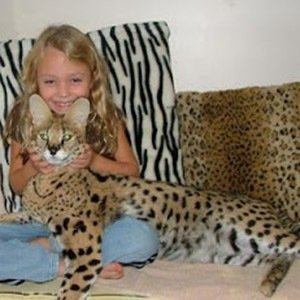 Savannah Cats-Interesting Facts About Cats