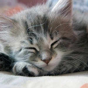 Sleeping Cat-Interesting Facts About Cats