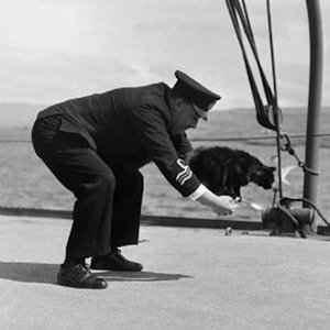 Unsinkable Sam-Interesting Facts About Cats
