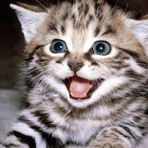 Cats- Random Facts List