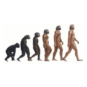 Evolution--Random Facts List