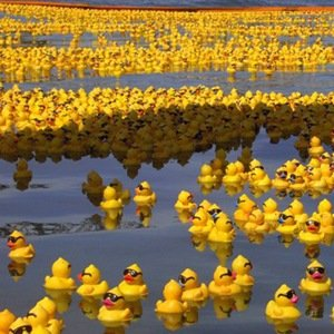 Rubber Ducks-Interesting Facts About Seas and Oceans