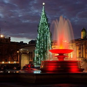 Trafalgar Square Christmas tree-Interesting Facts About Christmas