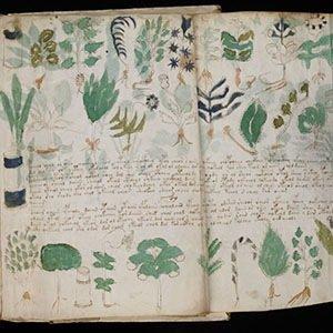 Voynich Manuscript-Random Facts List