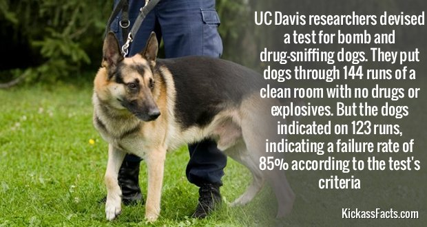 378Drug-SniffingDogs