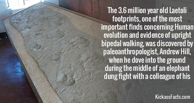 421Laetoli footprints