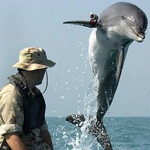 Killer Dolphin- Interesting Facts About Dolphins