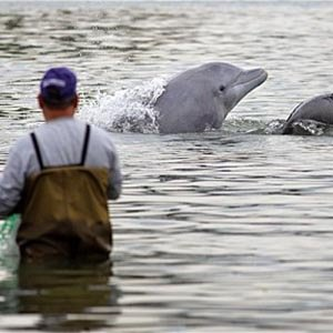 Fisherman Dolphins-Interesting Facts About Dolphins